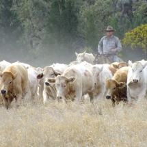 Mustering at Jericho No 1 - Copy_preview