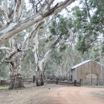 Pental Island Woolshed, Swan Hill, VIC_preview