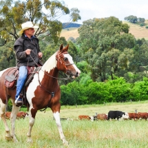 Rounding up at Rose Valley VIC_preview